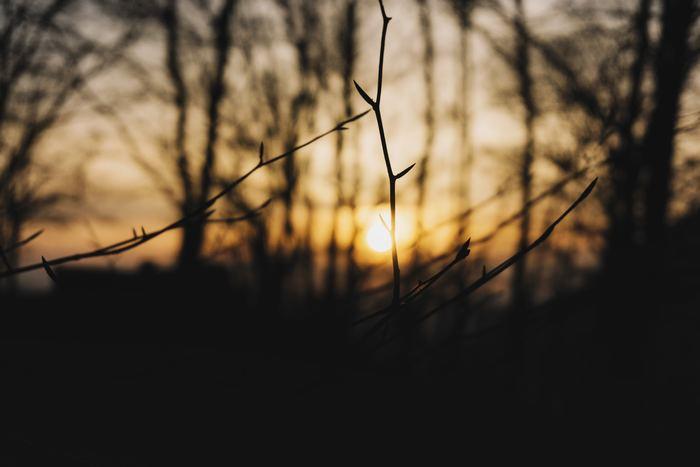 """12月はクリスマスや大晦日などの楽しいイベントがたくさんありますが、もうひとつ大切な行事といえば「冬至(とうじ)」ではないでしょうか。冬至は、一年で最も昼の時間が短く、夜の時間が長い『太陽の力が最も弱まる日』とされています。つまり""""冬至を境に太陽の力が強まる""""ということ。そのため、世界中でもさまざまな風習が残っていますよ。"""