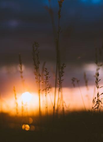 急に日が暮れるのが早くなって、秋の空気になってきましたね。こんな季節は少し心細くなります。そういう時はまっすぐ家に帰って、あたたかい飲み物を飲みながらゆっくり過ごしたいですね。
