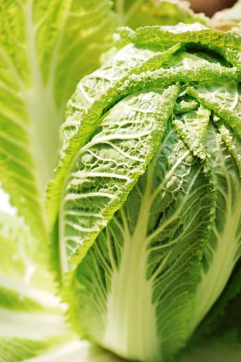 大きくてたっぷり使える白菜は、旬の時期には安価で手に入るので食卓に並ぶ回数も増えますよね。水分が多くて低カロリーな上に、ビタミンやミネラル、食物繊維などがバランスよく含まれているのでダイエット中の方にもおすすめの食材なんです。