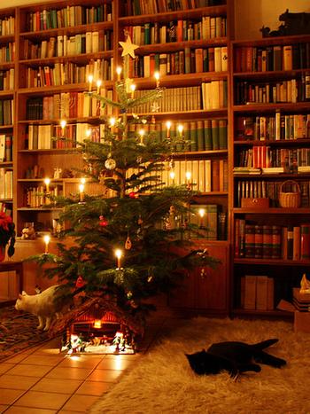 街に溢れるクリスマスのデコレーションを見ると、どこか浮き足立ったワクワクした気持ちになりますね。