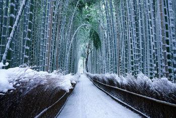 紅葉の季節を過ぎてからの「冬の京都」は、ぐんと人が減ります。けれど、賑やかな季節が過ぎ、しんと静かな旅情を感じられる冬の京都も、しっとりとした情緒があってまた素敵なんですよ。