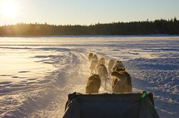 特に絶大な人気を集めるアクティビティが犬ぞり。凍った湖や雪道を犬ぞりでさっそうと駆け抜けるのはとても気分爽快です。人懐っこい犬にも癒されてしまいそう。