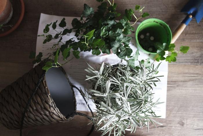 植物の周りに少し振りかけたり、虫除けしたい場所に振りかけるだけでOK。また、植物を傷つけてしまった時はその場所にシナモンをつけるとよくなります。自然のスパイスなので安心して使えるのも嬉しいところです。