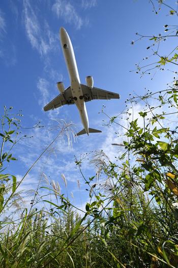 航空会社がそれぞれ提供している機内サービスや機内食については、ネットの口コミや体験ブログなどでたくさんの感想を見ることができます。飛行機を使ってお出かけする機会には、ぜひいろいろな情報を集めて航空会社を選び、空の旅をとことん楽しみましょう。もちろん、気になる機内食もしっかりチェックして下さいね♪