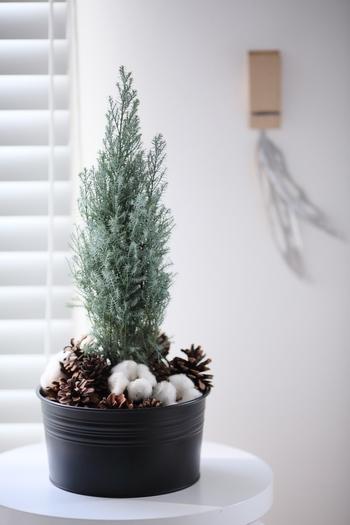 コニファーやゴールドクレストのようなクリスマスらしい植物は根元をさりげなく飾ってかわいいセカンドツリーに。こちらは松ぼっくりとコットンフラワーで足元を隠しています。スツールの上にちょこんと置いて、お部屋にグリーンを取り入れる感覚で。
