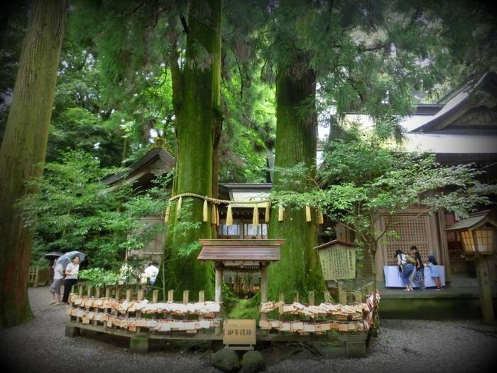 こちらは「夫婦杉」という幹が繋がった珍しい杉。その大きさにも圧倒されますが、手を繋いで3周すると願いが叶うと言われているんだそう。高千穂神社を訪れた際には、大切な人と一緒にやってみてくださいね♪