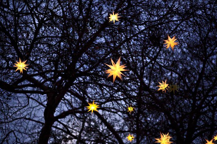お部屋だけでなく、屋外でのデコレーションも楽しみたいですよね。外で使える星のライトを見つけたら、ぜひ庭木に付けて楽しんでみてください。色んな種類で飾りつけするよりも、シンプルでとってもお洒落な雰囲気のお庭になりますよ。