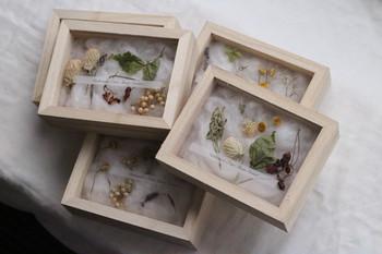標本箱に詰められた花や木の実は、子どもの頃の秘密をこっそり覗いているような不思議な気持ちにさせてくれるインテリアアイテム。コットンの上にそっと乗せられた花や木の実は、全ておまかせでデザインしてくれます。