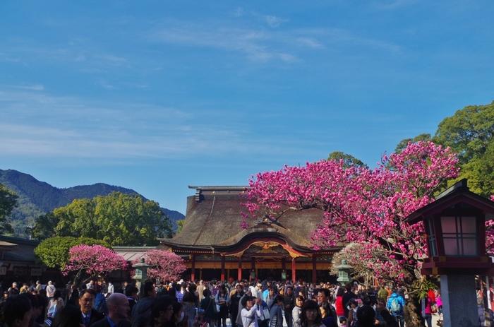 太宰府天満宮は、京都から左遷され、この地で没した学問の神様として知られている菅原道真を祀る神社です。