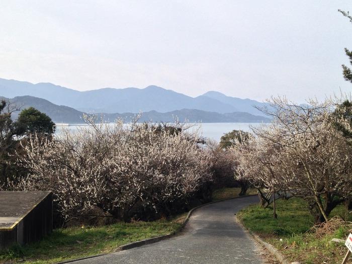 「筑後富士」「糸島富士」「小富士」といった異名をもつ美しい山容をもつ可也山の麓に広がる小富士梅林では、約3000本の白梅が植栽されています。