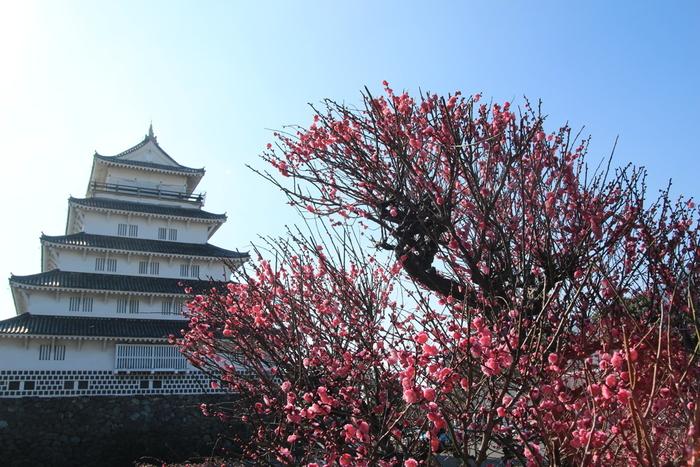 雲仙岳の麓に位置する島原城は、1624年に築城され、1871年に廃城となった城跡です。現在は復元された5重の天守閣があり、天守閣麓には、約285本の梅が植栽された梅林があります。