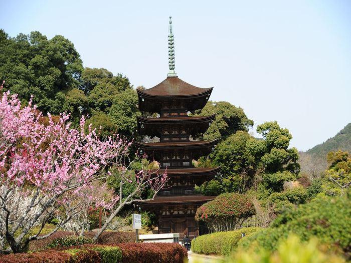 1471年に創建された瑠璃光寺は、薬師如来を本尊とする曹洞宗の寺院です。香山公園と呼ばれる境内は梅や桜の名所として知られており、山口県を代表する観光名所でもあります。