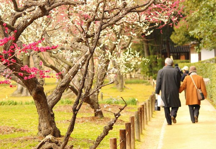 日本三名園(兼六園、後楽園、偕楽園)の一つに数えられ、国の特別名勝に指定されている後楽園は、江戸時代初期に造られた庭園です。広大な敷地には、様々な花が植えられており、毎年2月中旬から3月上旬にかけて梅が見頃を迎えます。