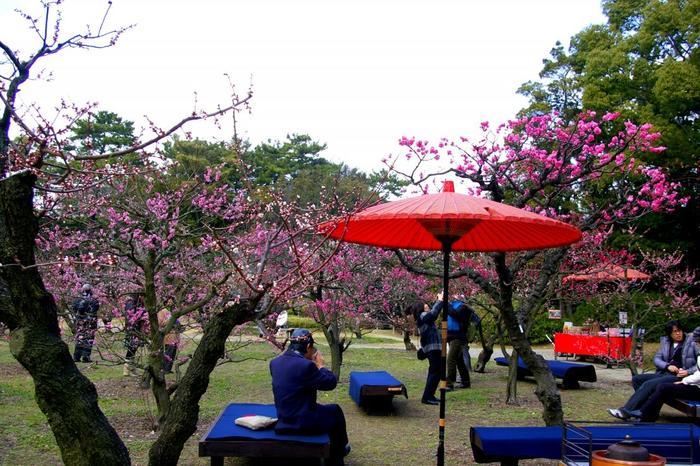 明谷梅林は、徳島県最大の梅の名所として知られており、その敷地面積は、約5万平方メートルを誇ります。