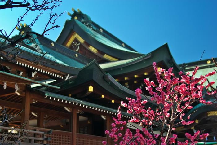 学問の神様、菅原道真公を主祭神として祀る大阪天満宮の境内には、紅梅と白梅を中心として約100本の梅が植栽されています。