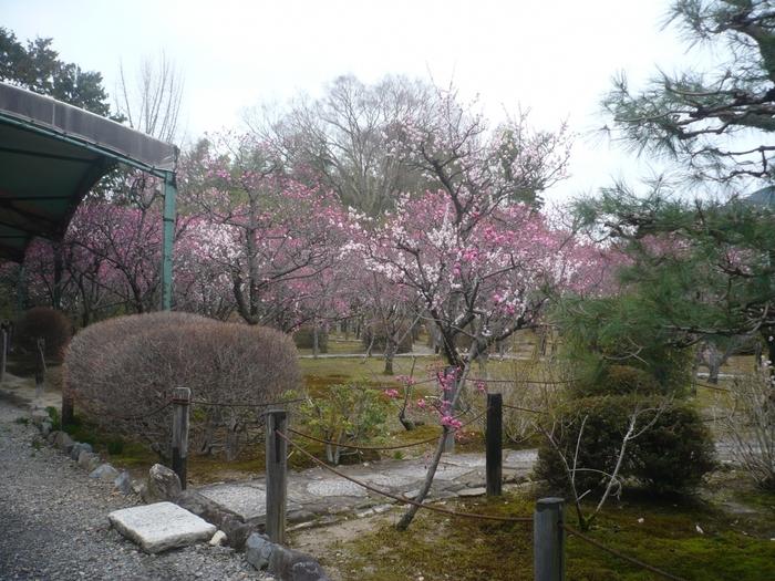 随心院は、平安時代に活躍した女流歌人、小野小町ゆかりの寺院です。名勝 小野梅園では、紅梅が見事に花を咲かせ、境内を桃色のグラデーションで包み込みます。