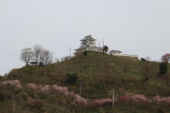 かつて豊臣秀吉が陣を築いた河原城周辺の河原中央公園は、約800本の梅が植栽されています。河原城跡には、お城山展望台とも呼ばれる天守閣があり、展望台から梅林を一望することができます。