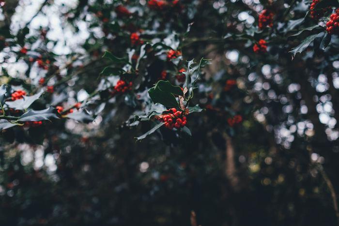 クリスマスもお正月も12月の後半だからまだ先だと思っていたら、後半の休日は用事で潰れお正月は疲れがどっと出てしまいます。それだけでなく、お買い得時期を逃してしまったり、お歳暮や年賀状を出すのが遅れてしまったりと残念なことも。あたふたしないためにも余裕を持ってやるべきことをリストアップしておきましょう。