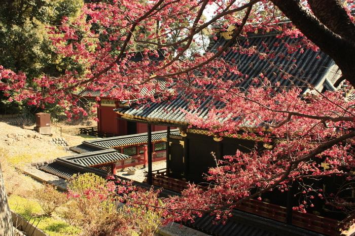徳川家康を主祭神として祀る久能山東照宮は、1617年に創建された神社です。境内には約200本の紅梅や白梅が植栽されており、久能山東照宮の美しさを引き立てています。