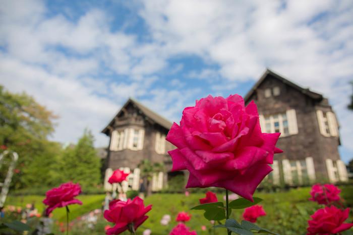 手入れの行き届いたバラはどれも美しく咲いています。表情の違うバラを一つ一つ眺めるのも優雅な気持ちになれます。
