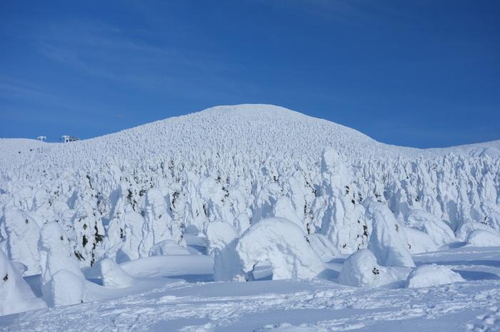 自然が造り出す芸術品、山形県「蔵王の樹氷」。樹氷は、過冷却された霧が樹木に吹き付けられて凍ったもので、-5℃の気温のとき風の当たる方に大きく成長するそうです。その圧倒的な存在感から「スノーモンスター」「アイスモンスター」などとも呼ばれます。