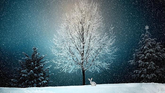 寒い冬のひととき、暖かいお部屋の中で静かに絵本を眺めていると、きっと心がじんわりと温まってくるのを感じることができることでしょう。