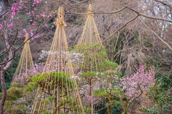 古くから梅の名所として知られている京王百草園には、紅梅、白梅、八重寒紅、淋子梅、おもいのままなど様々な品種の梅約500本が植栽されています。毎年、梅が見頃を迎える時期になると「梅まつり」が開催され、大勢の花見客で賑わいます。