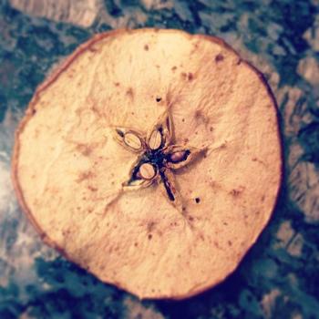 りんごの美味しさがたっぷり詰まっています!