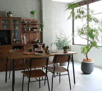 どんなインテリアにも馴染みやすい観葉植物をいくつかご紹介しました。お部屋のメインとなる大きなものから、窓辺などちょっとした場所に飾れるミニサイズのものまで、その種類は様々です。お部屋がなんだかちょっと寂しい…そんな時は、手軽に取り入れられるグリーンを迎えてみてはいかがでしょうか。