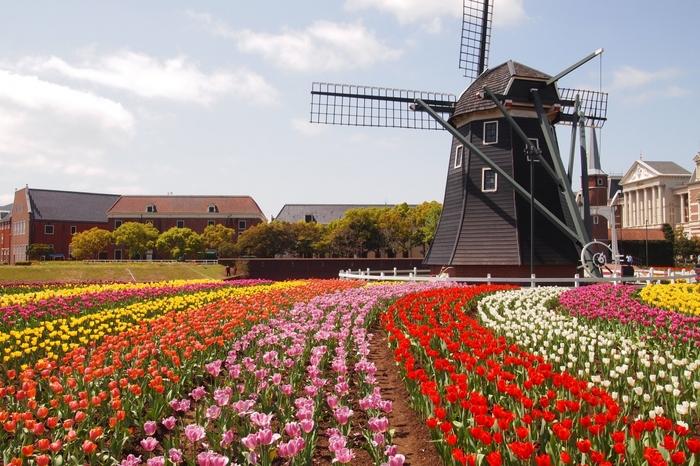 ハウステンボスは、一年中花が咲き誇っているのも魅力。春にはチューリップや菜の花、夏はバラとあじさい、秋は花の世界大会、冬は胡蝶蘭などが園内を彩ります。