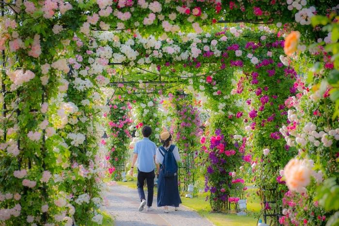 2018年5月12日~6月3日まで「バラ祭」が開催予定です。2,000品種120万本の色とりどりのバラが咲き乱れ、47種のバラのアーチが素敵な「バラの回廊」は、絵本の中に入ったかのようなロマンティックな風景が楽しめます♪