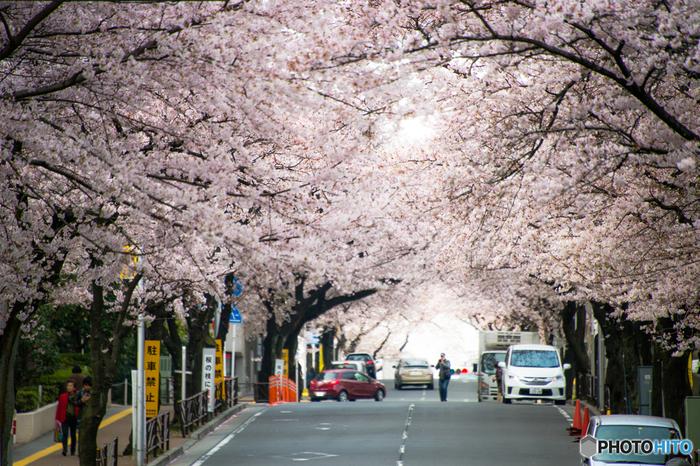 宮崎台駅南口から続く桜並木を登って数分。2018年にオープンから4半世紀を迎える喫茶店です。