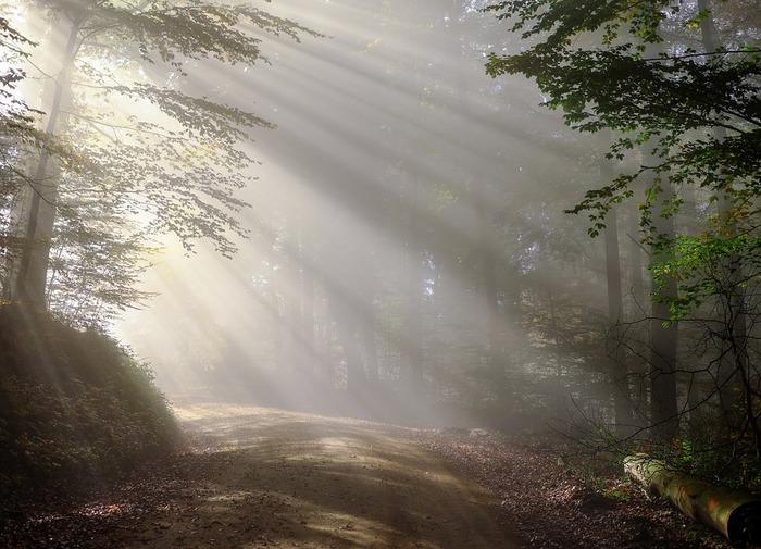 新緑の森の中を歩いているような、すっきりとさわやかな香り。男女問わず親しまれている香りです。