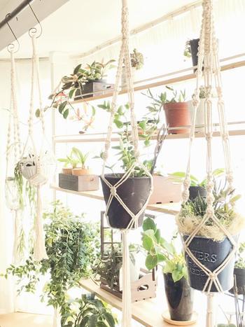 カーテンレールや梁などを使用して吊り下げる「ハンギング」。マクラメ(編み紐)やチェーンなど、提げる道具の雰囲気次第で印象が変わります。写真のように鉢物を提げるときは、フックの耐荷重などをしっかり確認しましょう。