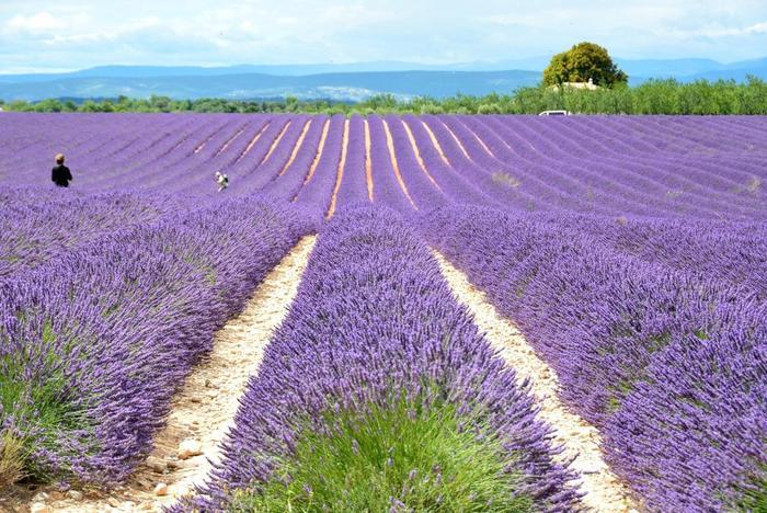 香りに対して敏感で、香水の先進国であるフランス。ラベンダー畑や豊かな自然が広がるフランスでも人気の地方プロヴァンス。