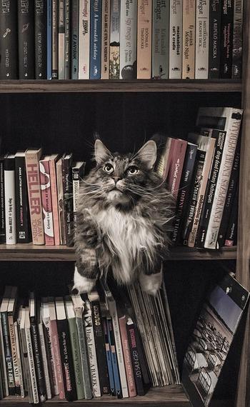 本棚に並んでいる本たちは、たとえそれが未読であっても、過去に興味を持った事柄の遍歴そのものと言っても過言ではありません。改めて蔵書を眺めてみると、「以前こんなことを知りたかったんだな」「どうしてこれを読みたかったんだろう?」と、自分自身を客観的に振り返るきっかけにもなります。
