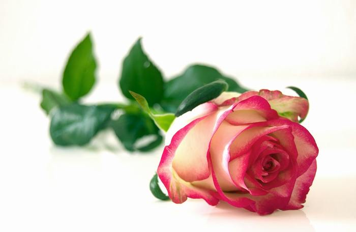 幸福感で満たされたい! そんな時にぴったりなのがローズやジャスミンなど高級感溢れるお花の香り。香水の材料に多く使われているローズやジャスミンはうっとりするような甘い香りで心から幸せな気持ちに浸らせてくれます。恋する気持ちを高めたいときにもおすすめです。  ◆幸せな気持ちになりたい時にぴったりのアロマ◆ ローズアブソリュート・ローズオットー・ジャスミン・ジャスミンサンバック・ネロリ