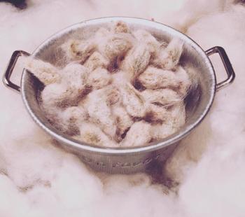こちらは綿に包まれた綿の木の種。鉢やプランターでも育てることが可能だそう。 5月初旬頃から中旬が蒔きどきで、前日から水につけておくと発芽しやすくなるそう。いつかベランダで綿を収穫する日もくるかもしれません。
