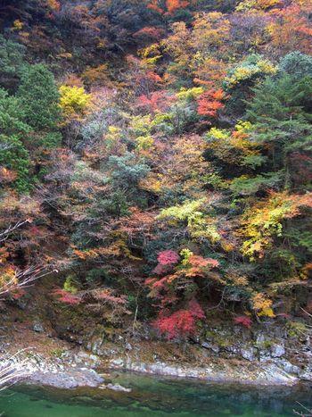 小太郎岩は、奈良県屈指の紅葉の名所として知られています。晩秋になると、岩壁と麓の渓谷は鮮やかに染まった樹々で覆われ、錦そのもののような景色へと変貌します。