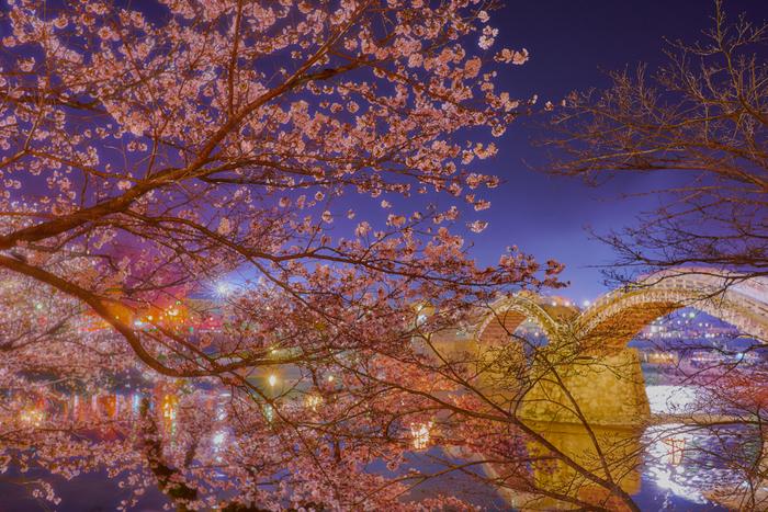 錦帯橋は夜になるとライトアップが施され、壮麗な姿となります。闇夜に浮かび上がる木造アーチ橋と光を浴びて輝く桜を錦川が鏡のように映し出し、幻想的な雰囲気が漂います。
