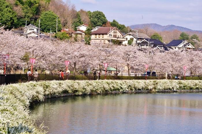 約17ヘクタールの敷地を誇る上野公園は、江戸時代初期に造園された公園です。公園内には、1933年から植栽が始まった桜が約2000本植えられています。