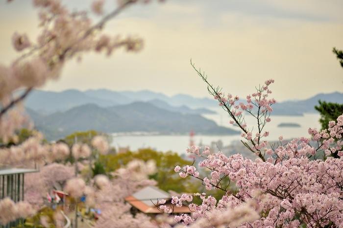 小高い丘にある千光寺公園は、瀬戸内海を一望できる抜群の眺望スポットとして人気の場所です。毎年3月末から4月上旬にかけて、大小の島々が浮かぶ瀬戸内海と満開の桜が織りなす絵画のような景色が広がります。