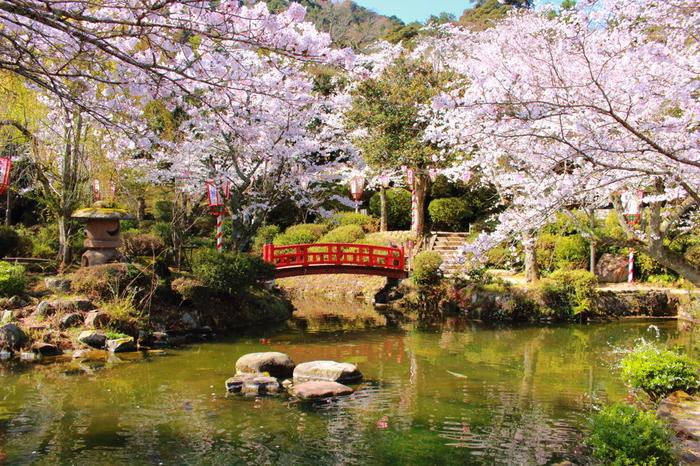 標高204メートルの打吹山麓にある打吹公園は、山陰地方を代表する都市公園の一つで、「日本さくら名所100選」のほか、「日本の都市公園100選」、「森林浴の森100選」にも選定されています。山陰地方屈指の桜の名所となっている打吹公園には、約4000本の桜が植栽されており、公園風景の美しさを引き立てています。