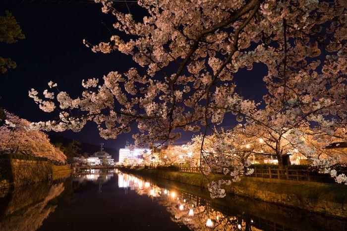 桜が見頃を迎えると、桜まつりが開催され、ライトアップを施された見事な夜桜を楽しむことができます。
