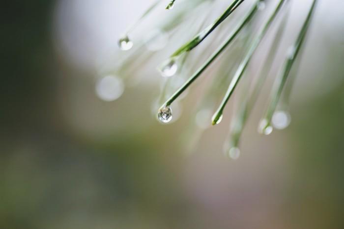 """二十四節気の第6番目にあたる「穀雨」は、春季最後の節気です。""""春雨が降って百穀を潤す""""という意味から「穀雨」と名づけられました。この時期は春雨が降る日が多くなり、田畑を潤して様々な農作物の成長を促します。また、野山や水辺の緑も日ごとに色濃くなり、爽やかな初夏の訪れを感じさせてくれます。"""