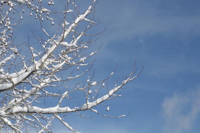 旧暦では一年の始まりは「立春」であるため、「大寒」は二十四節気において最後の節気になります。その名の通り一年で一番寒い時期ですが、この寒気を利用して、昔から寒天・酒・味噌など様々な食品の仕込みが行われてきました。