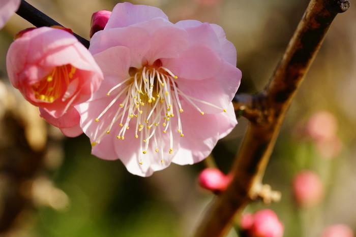 日本の伝統文化や美意識は、四季を通じて移り変わる風景や色、食べ物や香りなど、豊かな自然によって育まれてきました。 また、古来より日本人の暮らしの中には、節分や冬至など、季節ごとの様々な行事も根付いています。 そうした四季折々の楽しみや年中行事、農耕時期などを知る目印として、昔から親しまれてきたのが「二十四節気」と「七十二候」です。 今回は季節を表す旧暦の言葉とともに、それに伴う暮らしの手仕事や、その季節ならではの楽しみ方についてご紹介します。