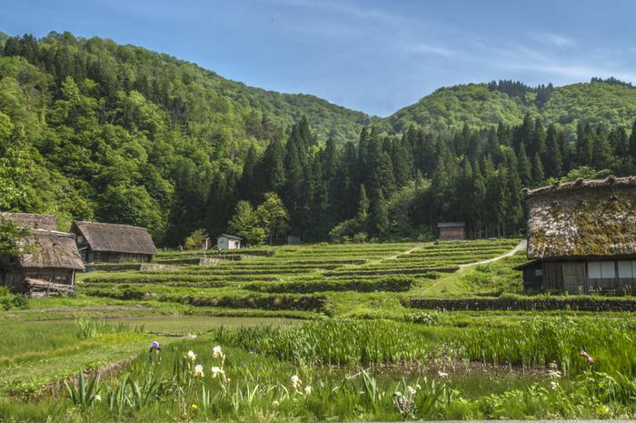 もともとは古代中国で使われていたものですが、日本には6世紀ごろ暦とともに伝来したそうです。二十四節気の名称には季節ごとの特徴を表した言葉が用いられているので、自然や季節の移ろいを身近に感じることができます。また、農業を中心にしていた昔の人々の生活においては、種まきや収穫などの目安にも役立てられてきました。