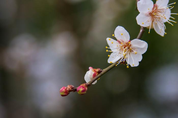 古来より日本人は自然を五感で楽しみ、季節に寄り添いながら暮らしてきました。 四季折々の情景や季節感を繊細な言葉で表した「二十四節気」と「七十二候」には、季節の移ろいを楽しむ昔ながらの日本人の暮らしの知恵が詰まっています。 日々の変化を細やかに感じ取り、豊かな心とゆとりを持って過ごすためのヒントを、暦の中から見つけてみませんか?