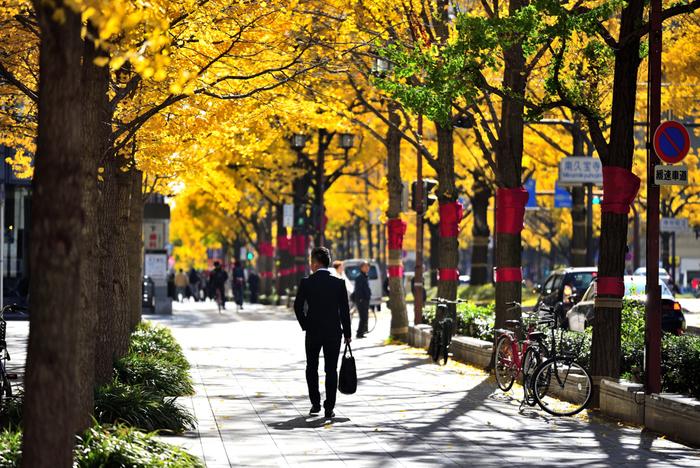 中之島中央公会堂の最寄駅も、中之島図書館と同じ地下鉄御堂筋線・淀屋橋駅ですが、JR大阪駅から歩いても15~20分程度です。「お天気のええときは、御堂筋の銀杏並木の下をのんびり歩いてみてもええんちゃう?」